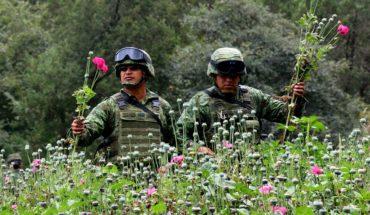 Hay diálogo con ONU para amapola medicinal: Sánchez Cordero