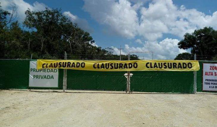 Jueza frena operación de megagranja de cerdos en Yucatán