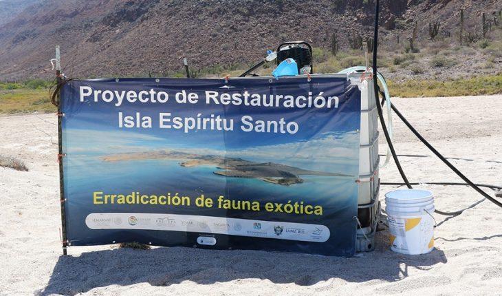 Senadora interpone queja por daño en Isla Espíritu Santo