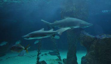 Video: Hombre salta desnudo a estanque lleno de tiburones
