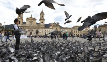 Bogota urges tourists that don't feed the pigeons