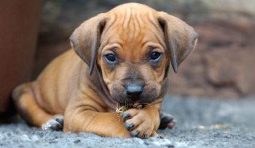 Diputado de Morena propone que personas puedan heredar a sus mascotas