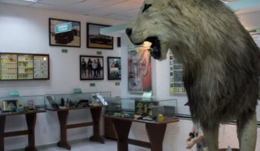 Drugs, Malverde and weapons in the eccentric Museum of the Enervante