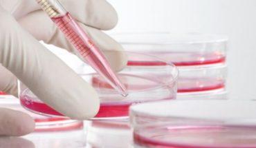 Estudio español logra eliminar el VIH en pacientes con trasplantes de células madre