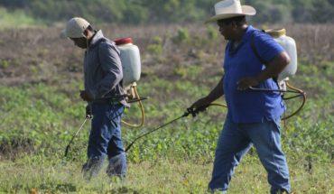 Las consultas con pueblos indígenas para explotar la tierra son una manipulación