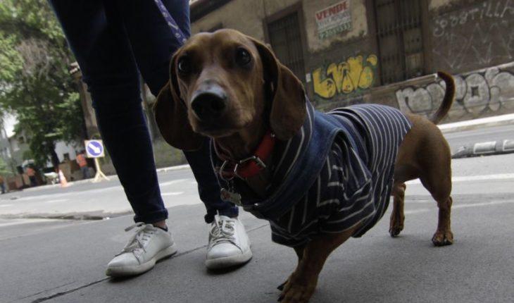 Proyecto busca poner fin a prohibición de mascotas en condominios y edificios
