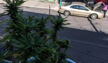SCJN issued case law in favor of the cultivation and consumption of marijuana