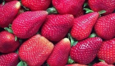 The pleasure of eating strawberries at any price: how much to pay for a kilo?