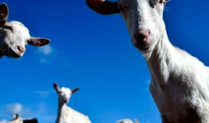They found at least 10 goats beheaded a U.S. River