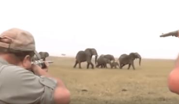 VIDEO: Cazadores desatan ira de elefantes al matar a su líder