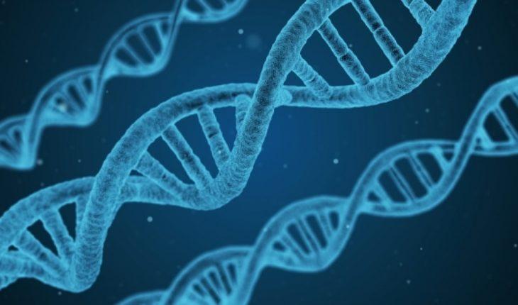 """Califican de """"prematuro, peligroso e irresponsable"""" supuesta modificación genética realizada en embriones humanos"""