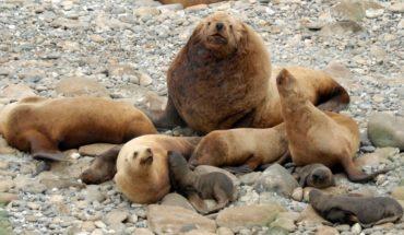 Condenan a pescadores por disparar a leones marinos en Alaska