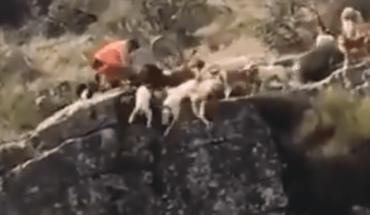 Decena de perros de caza caen a barranco al atrapar a un venado