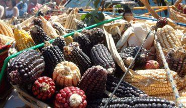 El INAI ordena a Sagarpa informar sobre presunta piratería de maíz mixe