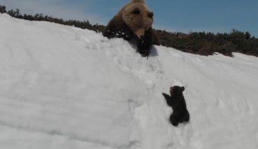 El lado oscuro del video viral del oso de la montaña