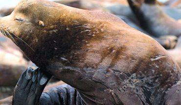 Hallan leones marinos mutilados y cargados de balas en playa de EU