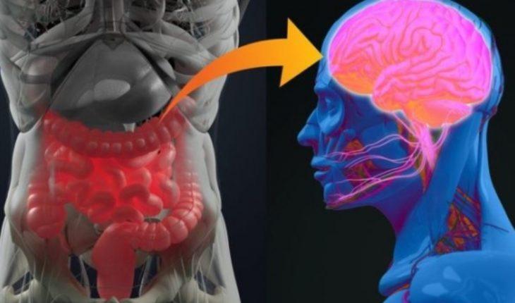 La investigación que reveló que la enfermedad de Parkinson podría originarse en el apéndice