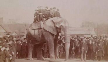 La triste historia del Dumbo de la vida real