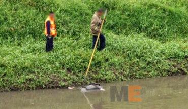 Localizan un cadáver humano en el Río Grande de Morelia