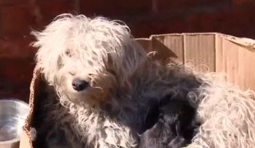 Periodista de Canal 13 estalló en llanto por perritos sobrevivientes de un incendio