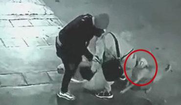Perrito callejero lo ayuda cuando sujetos lo asaltaban en Perú