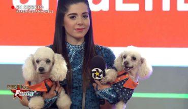 Jessica Correa y su gran espectáculo   Premios Fama