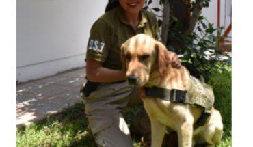 Anti-drug police dog returns home after 7 days lost