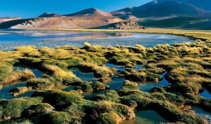La trágica y creciente pérdida de la biodiversidad en Chile