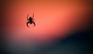 Learn the curious spider that is all the rage for his resemblance to a dog