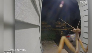 Mantis activates the doorbell to the horror of their owners who see a giant bug on the camera