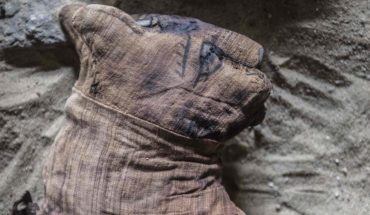 The fascinating discovery of the cats mummified in Egypt