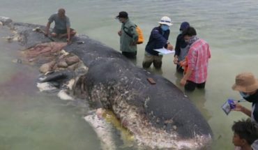 They found whale life with thousands of plastic objects in the stomach