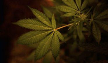 Uruguay inaugura laboratorio industrial para cannabis médico