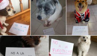 ¿Cómo afecta la pirotecnia a tu mascota y qué podés hacer para ayudarla?