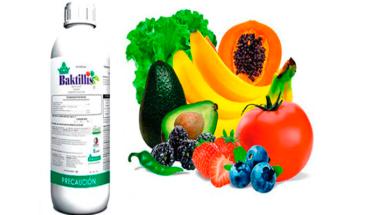 Baktillis, fungicida orgánico de reconocimiento nacional
