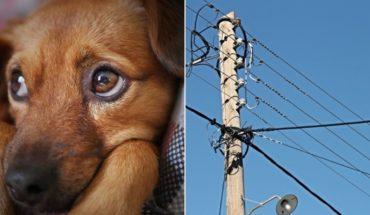 Cuelgan a perrito de cableado eléctrico en Hermosillo