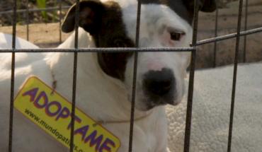 Diciembre, la época en la que más perritos son abandonados en CDMX