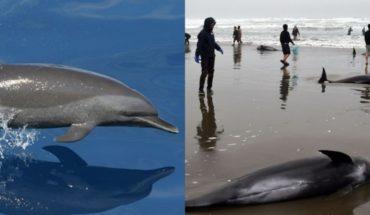 """Hallan cuerpo de un delfín con la palabra """"Juan"""" en un costado"""