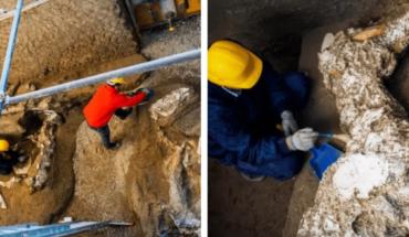Hallan los restos de un caballo en Pompeya