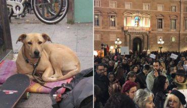 Indignación en Barcelona porque un policía mató a una perra en la Gran Vía