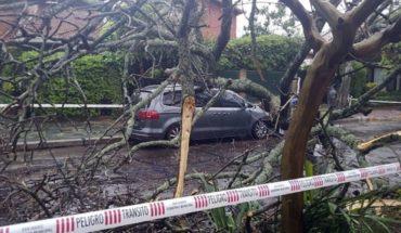 Los destrozos tras el temporal: árboles caídos y una antena rota en Avellaneda