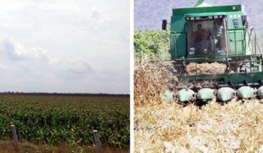 Pegan recortes a campo de Tamaulipas
