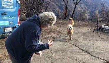 Perro sobrevivió a los incendios de California y cuidó la casa de su dueña durante un mes