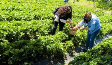 """""""Del huerto a la casa"""", la autocosecha de fruta florece en el sur de Chile"""