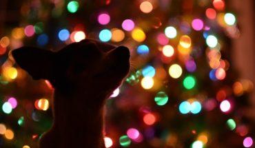Dueño abandona a su perro en calle solitaria horas antes de navidad
