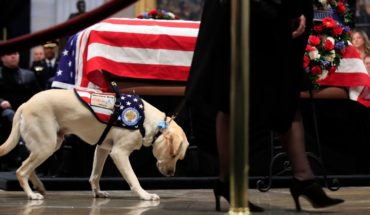 The amazing loyalty of Bush's dog: together until the last day