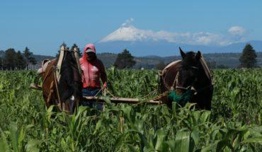 Agricultura crea nuevos programas sin reglas de operación