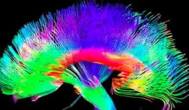 Mapean zona del cerebro donde ocurre la toma de conciencia