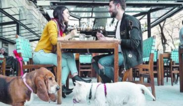 Pet friendly: los lugares para visitar con tu mascota