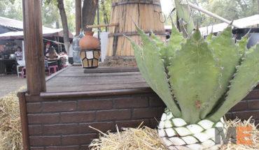 Solicitan productores mezcaleros, mayor apoyo para la Ruta del Mezcal Michoacano